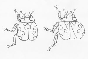 lady bug drawings mlw